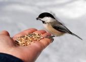 Жители Волгоградской области участвуют в акции «Покормите птиц»