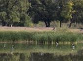 Минприроды рассматривает возможность строительства газопровода в парке «Волго-Ахтубинская пойма»