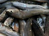 Волгоградские полицейские ликвидировали незаконный «рыбный трафик»