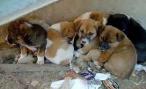 Благотворительный вечер в волгоградском приюте для бездомных животных «Дино» пройдет 14 августа