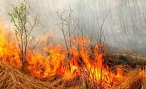 В Волгоградской области опять объявлен особый противопожарный режим