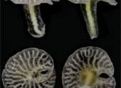 Новый вид жизни обнаружен на дне океана