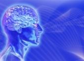 Мозг человека после 40 лет становится меньше