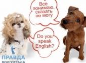 Курсы по изучению разговорного английского языка: преимущества и особенности