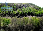 В Волгоградском парке «Щербаковский» специалисты провели фенологические наблюдения