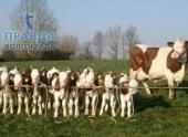 Волгоградские власти поддержат местных фермеров