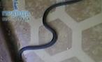 В Волгоградском здании автовокзала обнаружили живую змею