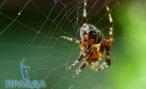 В Волгограде несколько человек стали жертвами пауков
