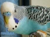 В Волгограде мертвого попугая приняли за взрывное устройство