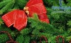 Волгоградская новогодняя ёлка обойдётся бюджету в 2,75 миллиона рублей