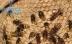В Волгограде рядом с детской площадкой поселились опасные шершни
