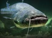 Подводная охота в Астрахани