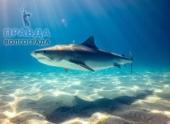 В полностью женском аквариуме у акулы родился детеныш