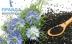 Может ли чернушка посевная убить коронавирус