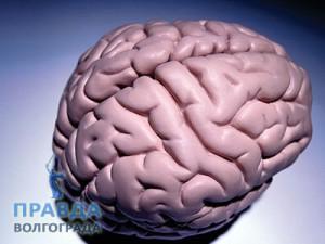 миф о головном мозге